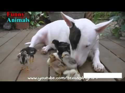 Awesome Videos: Amazing Animal Friendships - A amazing & funny vid...