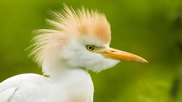 Top 10 The Most Cutest and Smallest Birds In The World