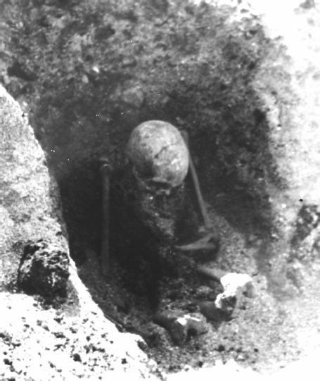 One of the skeletons found in the Sandvika sitting graves, Central Norway (Photo: NTNU Museum of Natural History and Archaeology, 1965-66) Accidentally, in 1963 a burial ground with 24 graves deep …