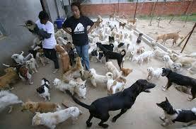 354 animale (261 câini şi 93 pisici) au fost sterilizate, deparazitate, identificate şi tratate în