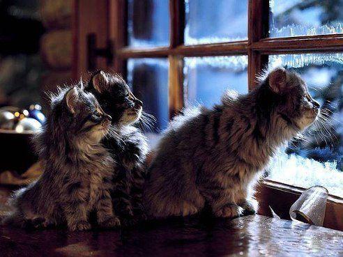 Cats*-*