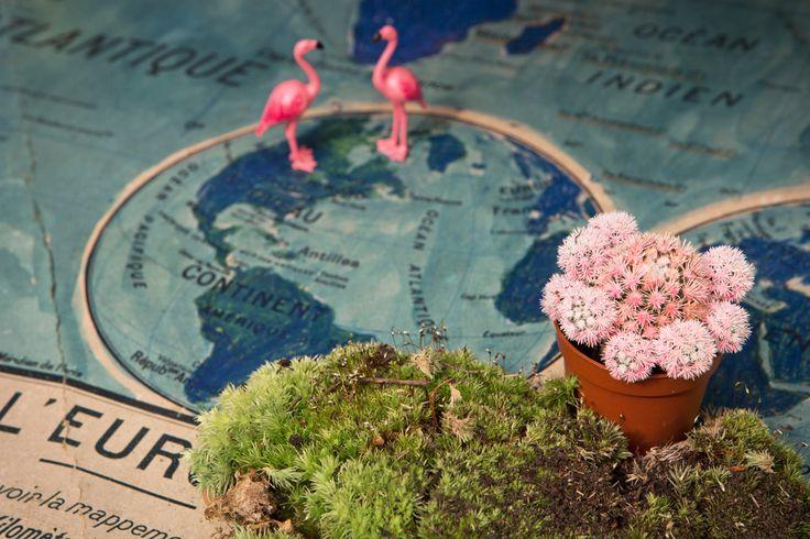 Z comme Zéro, set design cactus, flamands roses et planisphère par Les Trafiquantes