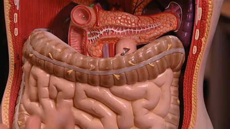 Welke weg legt voedsel af in je lijf? Een kijkje in je lijf, van mond tot kont.