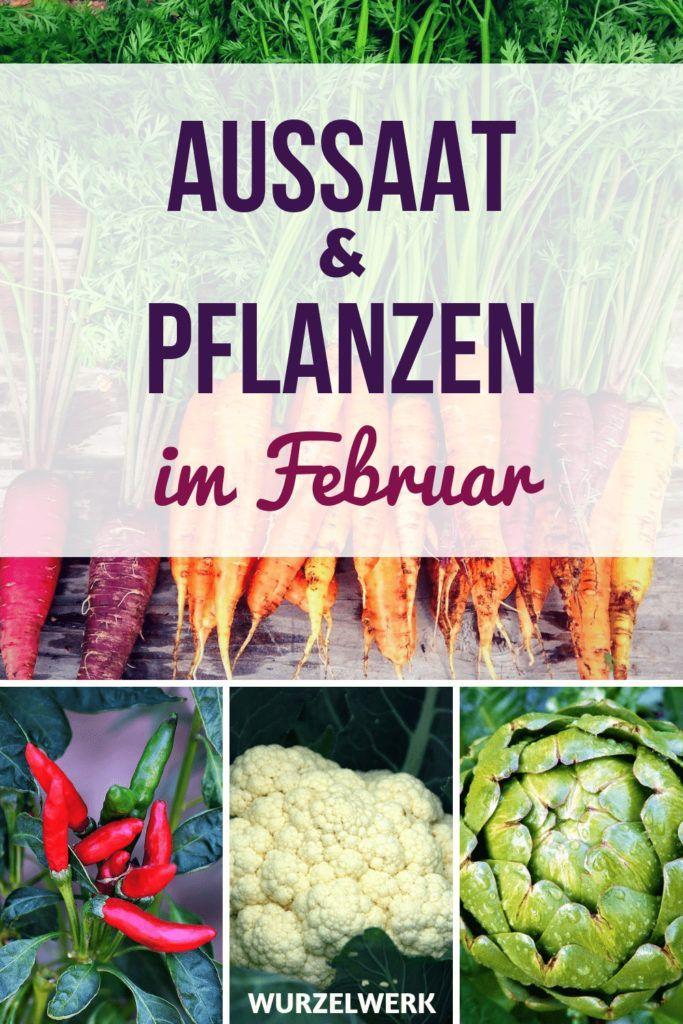 Aussaat Pflanzen Im Februar Beispiel Gartenplan Bauerngarten