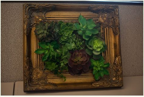 Plastic succulent display for the green-thumb challenged. My Cubicle Makeover - Run To Radiance