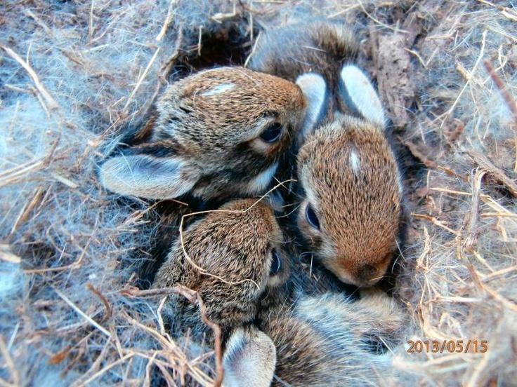 Baby Bunny Love @Olivia Eggers Hummingbird Cam