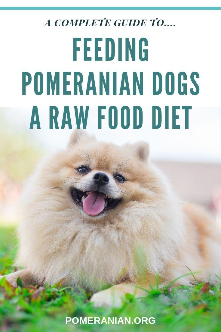 Feeding Pomeranians A Raw Food Diet Raw Food Diet Raw Dog Food