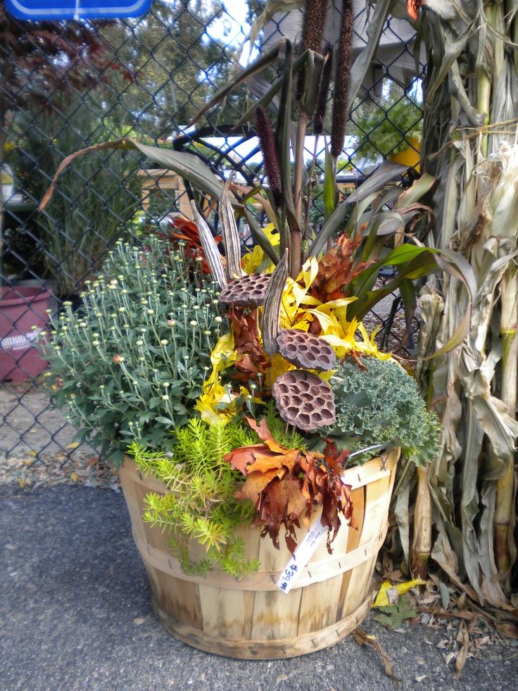 Fall Container Using Mum Cabbage Ornamental Millet