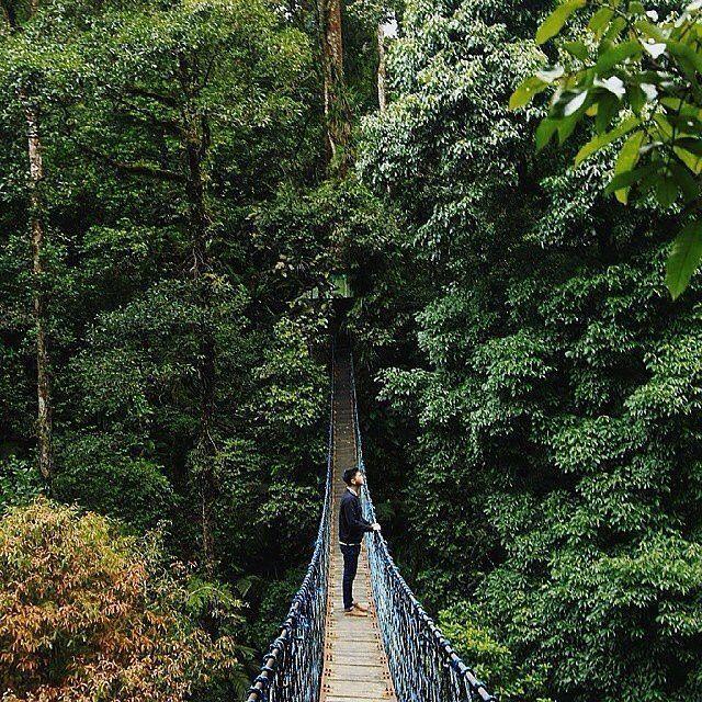 Canopy Trail,Taman Nasional Gunung Halimun Salak,Bogor #thisisindonesia  Photo by @henryharpono