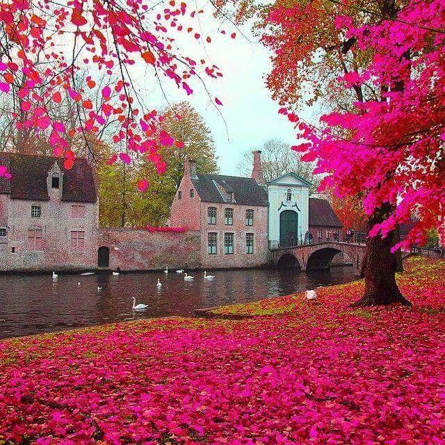 Pink fall in Belgium
