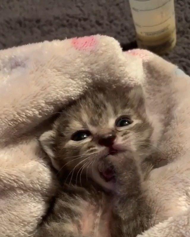 Bu Hesap Askiya Alinmistir Dora Veridyen Com Cat And Dog Memes Funny Cat Videos Funny Cat Pictures