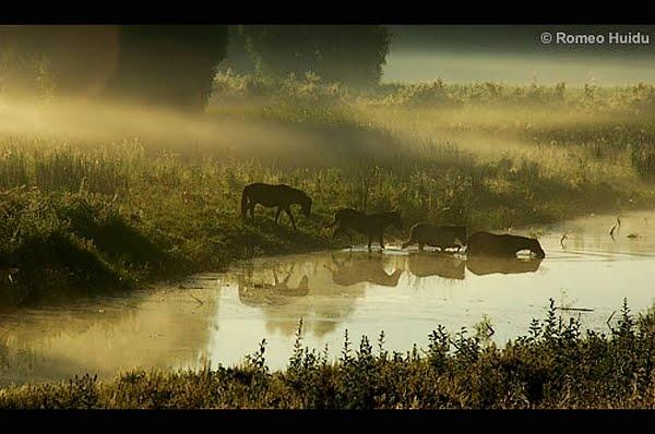 Wild horse on the Danube Delta