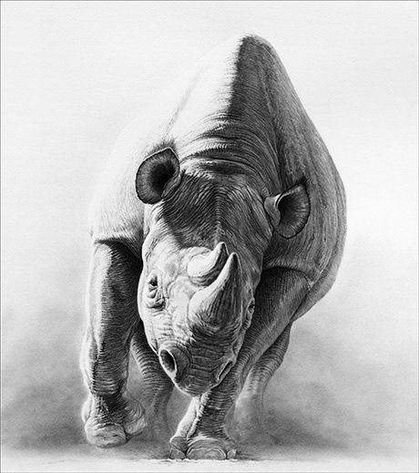 Gary Hodges Rhinoceros Heat and Dust