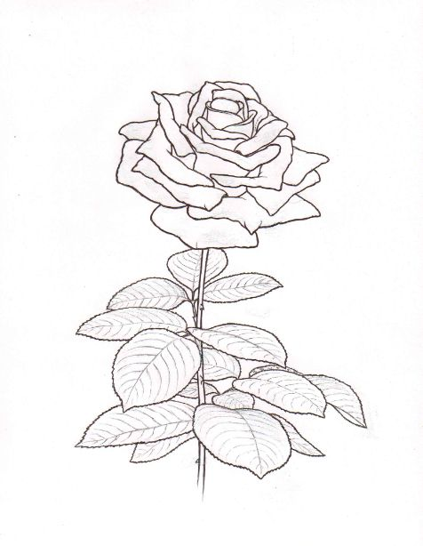 single flower coloring pages - 184 best coloring sheets for adults images on pinterest