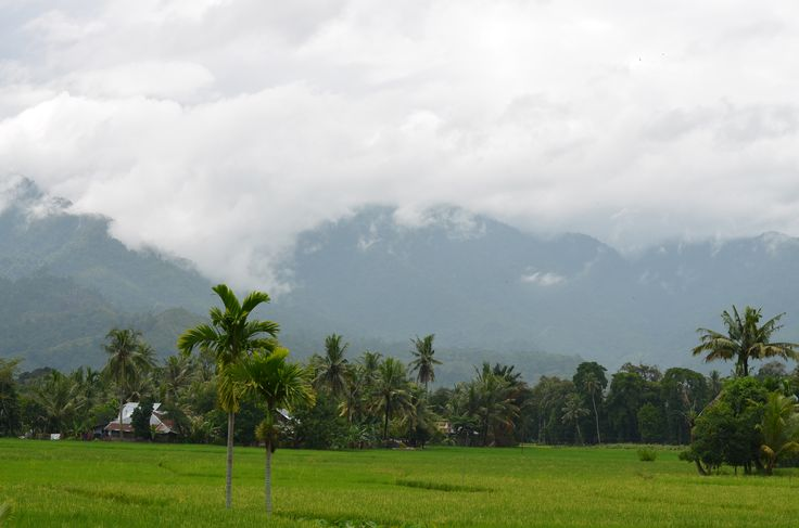 West Sumatra landscape. There are waterfalls everywhere in those mountains. #farmers #westsumatra