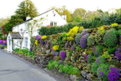 Reached #367 in Explore 29 April 07. Thanks all :) In a village in the South Lakes, the white rendering on the building is typical of English Lake District cottages and the natural stone walls of this garden provide a haven for colourful wall flowers.