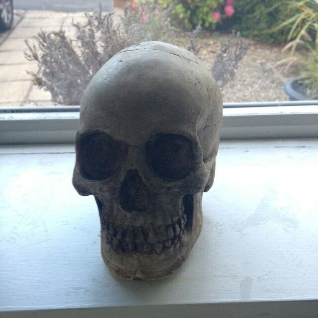 Plaster of Paris skull, - in pride of place on the kitchen windowsill. This was created using a home-made  latex mould.