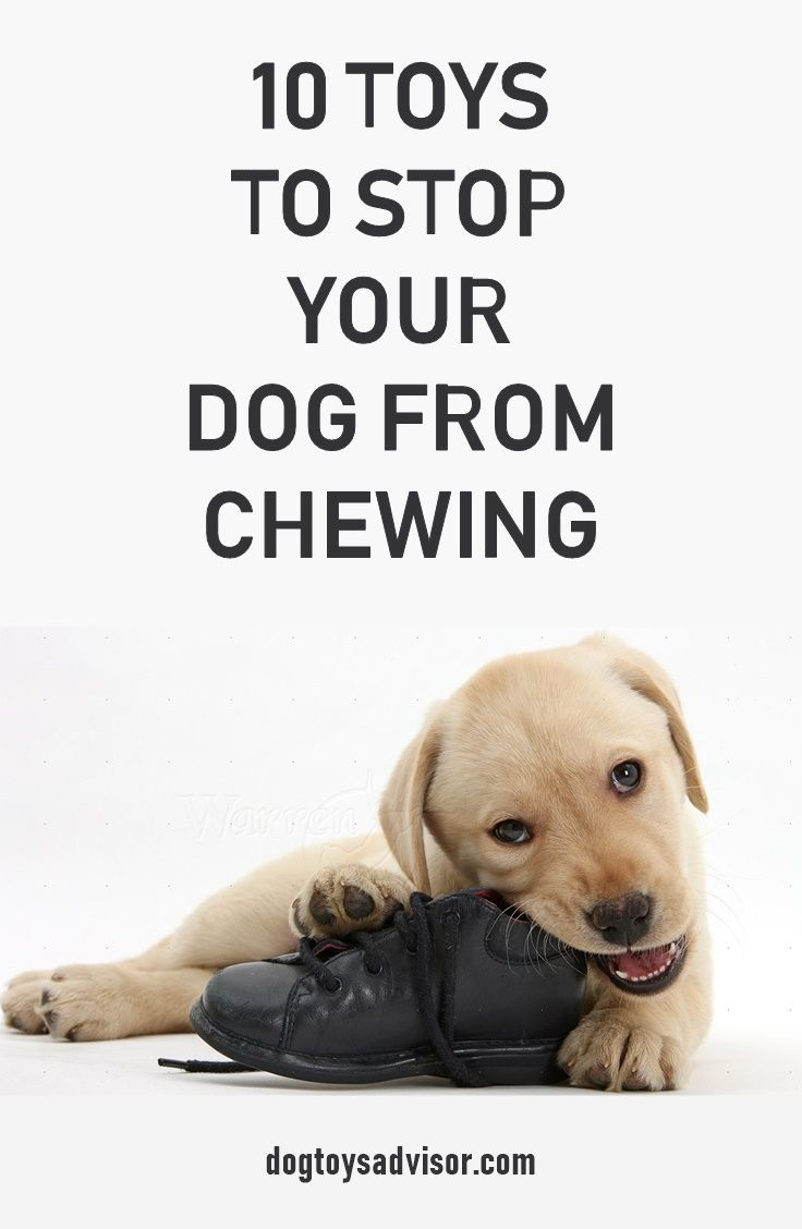 10 Best Toys To Stop Destrutive Chewing Dogs Need Something To