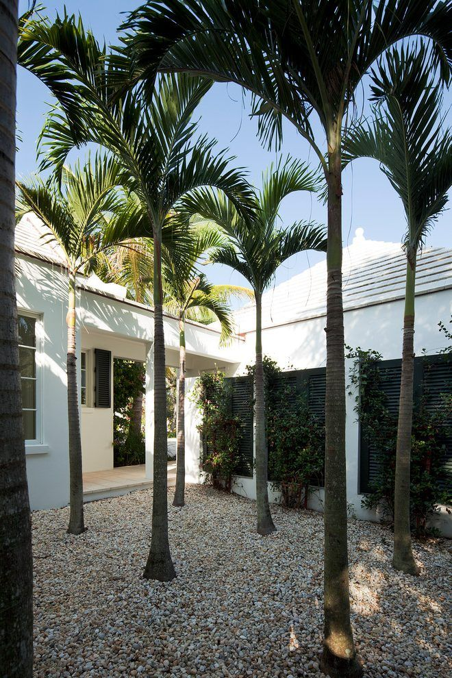 mediterranean garden palm trees landscape tropical with palm courtyard tropical outdoor products
