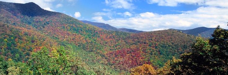 Asheville, NC Cabin Rentals - Vacation Rental Cabins, Condos - Carolina Mornings
