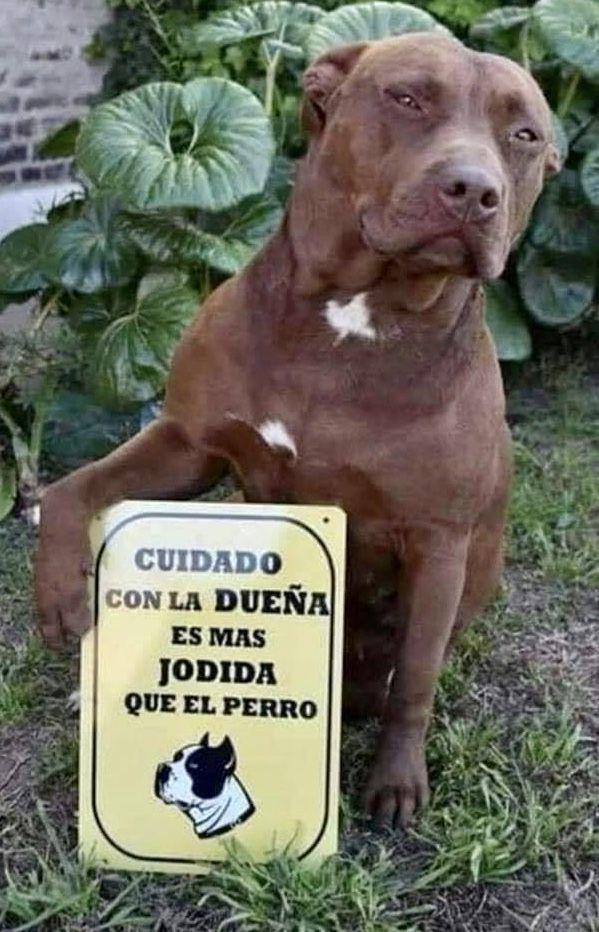 Pin De Patricia En Frases Chistes De Perros Perros Graciosos Memes Perros