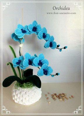 Orchidee blu