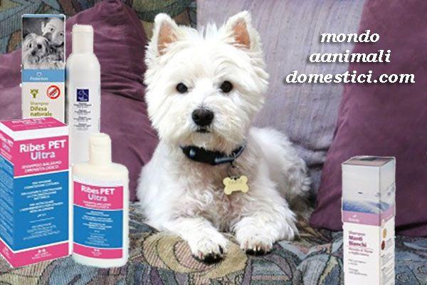 Quali sono i migliori Shampoo per Cani? Nell'articolo moltissime info su come pulire il proprio amico a quattro zampe perchè un cane pulito è un cane felice. #cani #cane #pulizia #puliziadelcane #puliziadeicani #shampopercani #shampoopercane http://www.mondoanimalidomestici.com/migliori-shampoo-cani-perche-cane-pulito-cane-felice/