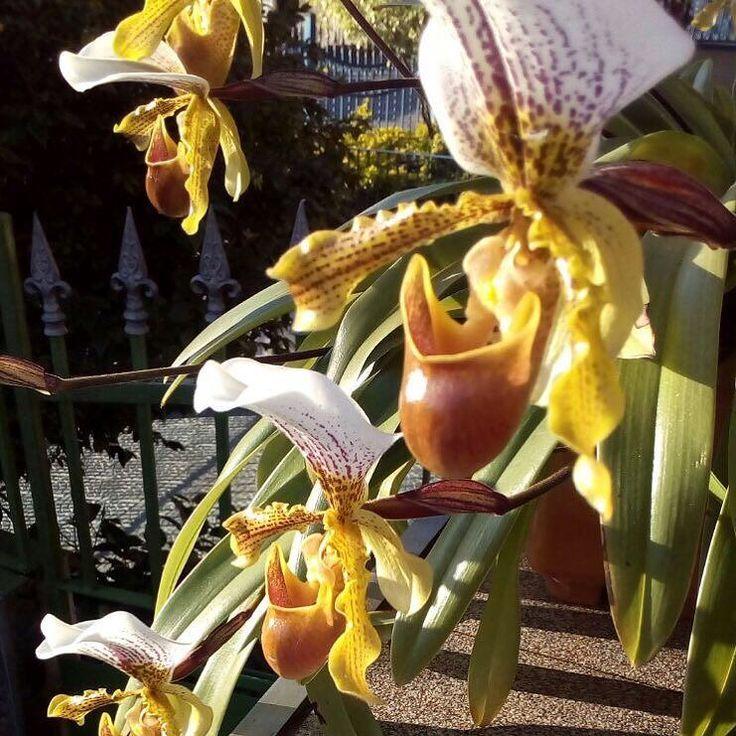 Onde for... floresça. Meu bom dia com flores do jardim da sogra. Ela enviou essa imagem linda. . . #decasalimpa #bomdia #flores #flowers #floresça #donadecasa #bomdia #mensagem #vidareal #maisumdia