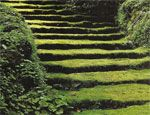 moss stairs!