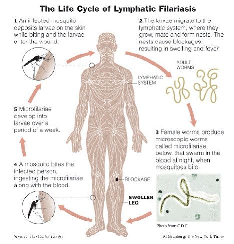Ciclo de Vida LF
