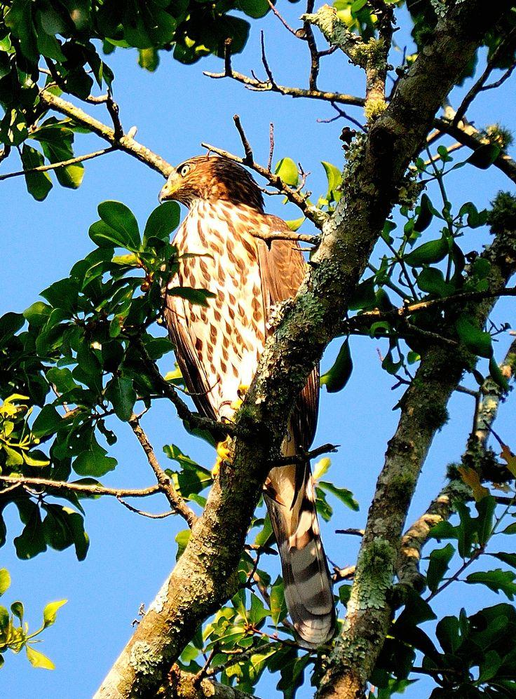 24 Best Birding Images On Pinterest Bird Birds And Birdwatching