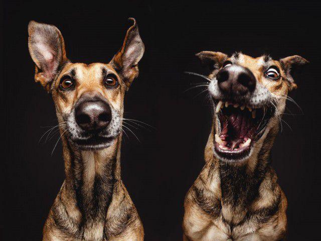 Про собак или почему собака лучший друг человека | Собаки ...