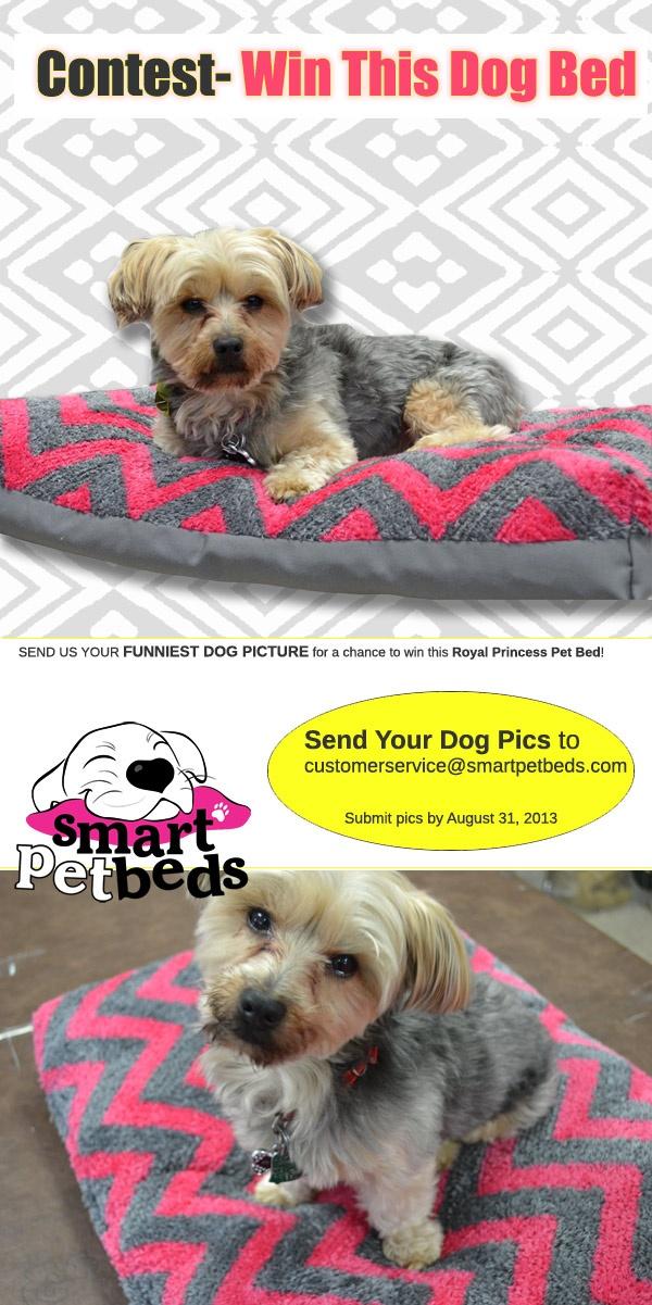 14 best Smart Pet Beds images on Pinterest | Pet beds, Best dog beds ...