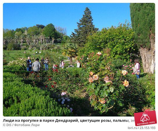Люди на прогулке в парке Дендрарий, цветущие розы, пальмы, зеленые деревья и кустарник © DiS / Фотобанк Лори