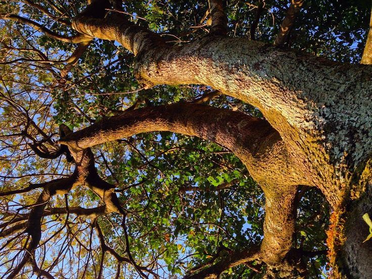 Maníaco das árvores. . . . . #naturelovers #skyblue #brasília #saved #tree #strong #trunk #igersbsb