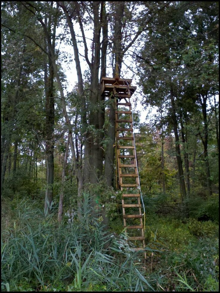 25 best images about deer stand on pinterest for Deer stand images