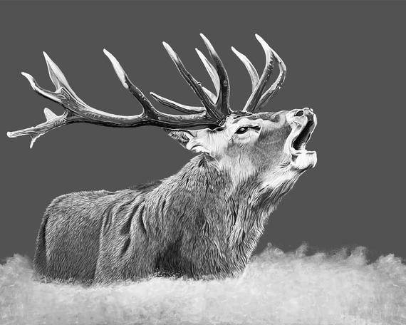 Stag Canvas Print Deer Canvas Print Wildlife Canvas Print Etsy Wildlife Prints Canvas Prints Deer Print