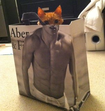 You can be anything you want to be...: Cats, Animals, Bag, Funny Stuff, Humor, Things, Kitty, Photo