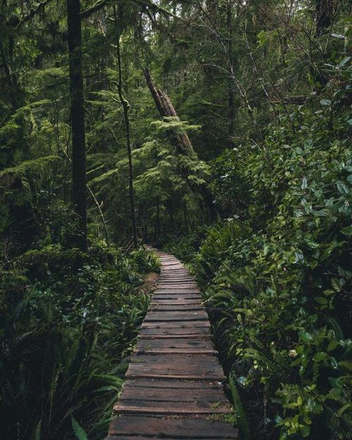 Vancouver Island –  Taylor Burk Pictures   | #journey #journey #wanderlust #…