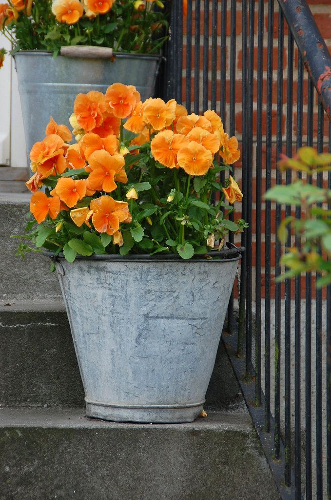 17 best images about galvanized tubs buckets on pinterest for Large galvanized buckets for flowers