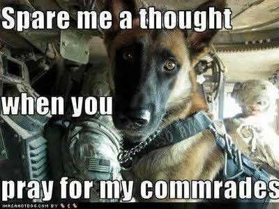 373 best war dogs images on pinterest military dogs military 373 best war dogs images on pinterest military dogs military working dogs and police dogs fandeluxe Document