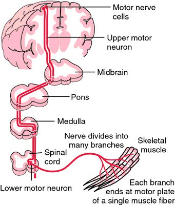 for What is motor neurone disease symptoms