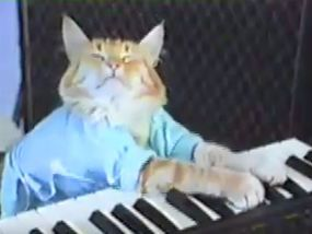 THE world famous Keyboard Cat has played his last notes. Bento the social media sensation whose musical skills saw him described as online megastar died at the age of nine.