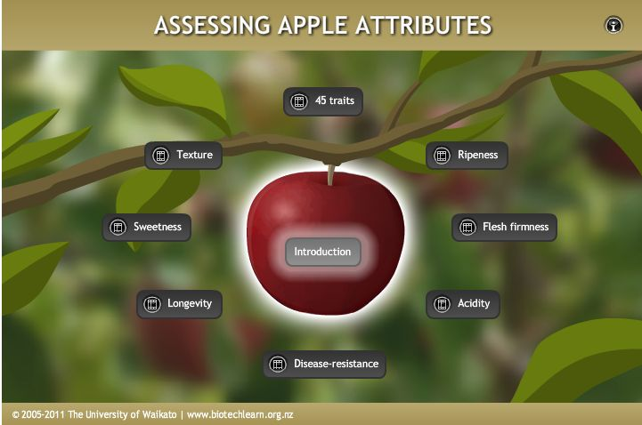 Assessing apple attributes: An interactive showing a range of apple attributes and some methods of assessing these.