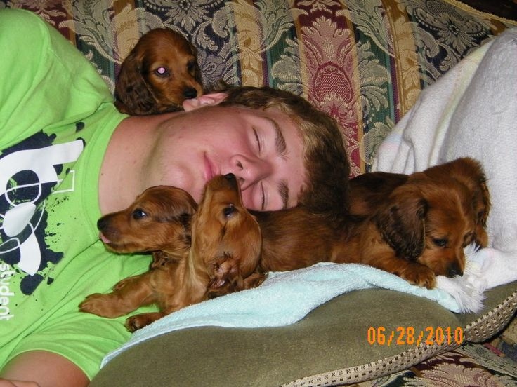 lolCute Puppies, Weenie Dogs, Dachshund Puppies, Dogs Doxie, Dachshund Clube, Weiner Dogs, Counting Sheep, Wiener Dogs, Animal