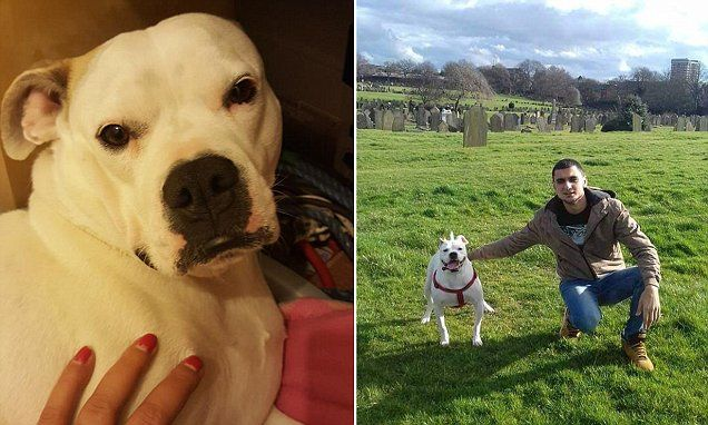 Bulldog dies after being thrown from balcony then beaten with sticks