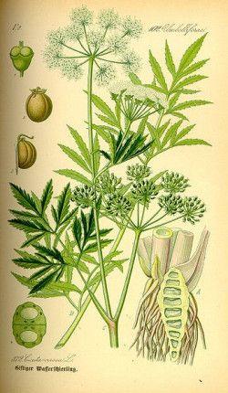 De meest beruchte giftige planten, struiken en bomen voor paarden | Brochure Hilde Nelis (UGent)