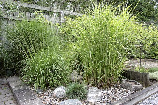 Jpersika - Trädgård & växter