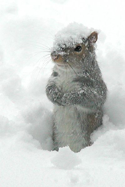 Squirrel in the snow #Winter
