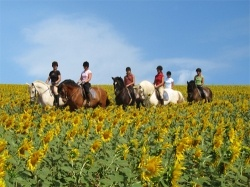 I hope to spend a week at Epona Equestrian Centre in Jerez de la Frontera.  Jerez is the perfect place - horses, flamenco and lots of wine!